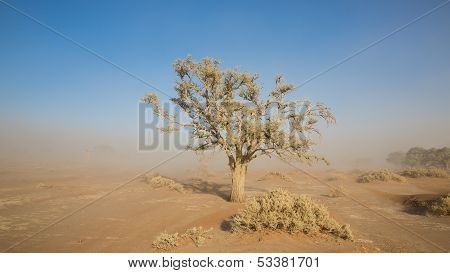 Sandstorm and tree