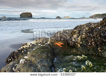 tide pool creatures, low tide in Oregon