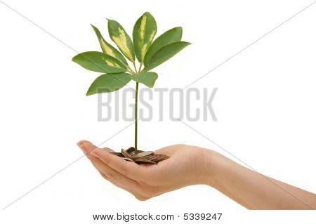 Pflanze und Münzen in der Hand auf weißem Hintergrund
