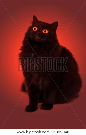 Evil Black Cat With Glowing Eyes Over Red Background