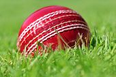 picture of cricket ball  - cricket ball on the grass - JPG