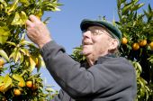 Old Man Picking Fruit