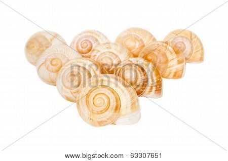 Pyramid Of Spiral Shells Isolated