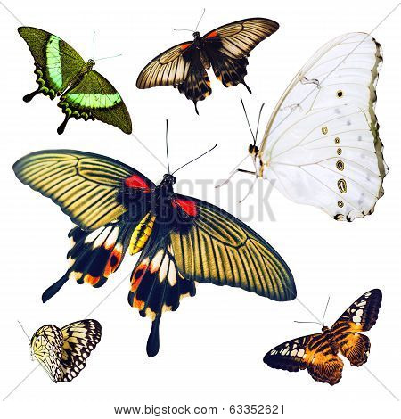 Set of isolated multicolored butterflies