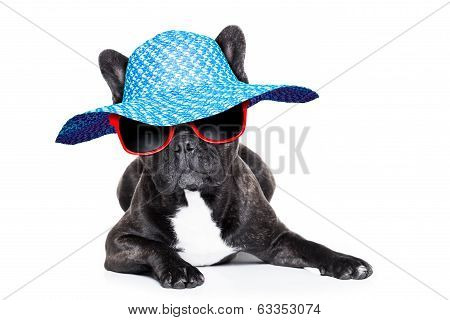 French  Bulldog On Holidays
