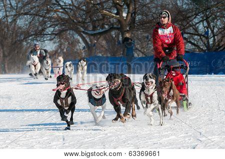 2014 Subaru Dogsled Loppet - Duke Rembleski