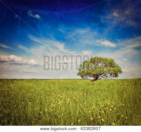 Vintage retro hipster style travel image of   grass field meadow scenery lanscape under blue sky with single lonely tree with grunge texture overlaid