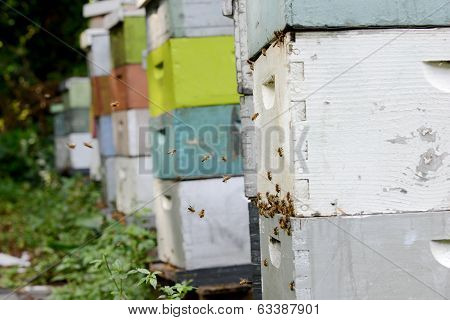 Bees And Apiary