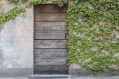 pic of english ivy  - old door with edera weed on the wall covering - JPG