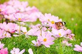 stock photo of swarm  - In the garden there is the butterfly is swarming the flower - JPG