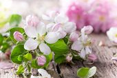 Spring background with beautiful blossoms