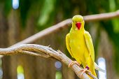 stock photo of parakeet  - Close - JPG