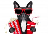 foto of pop star  - dog going to the movies with soda and glasses - JPG