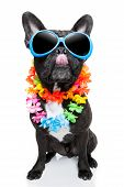 image of sticking out tongue  - dog on vacation wearing fancy sunglasses sticking out tongue - JPG