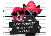 picture of mexican-dog  - two dogs just married and together in a mugshot picture - JPG