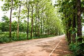 image of tree lined street  - Tree line street in the nature background - JPG
