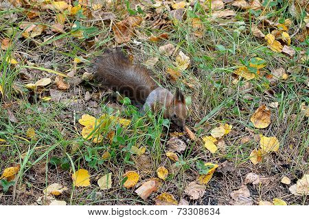 Squirrel In The Autumn Forest