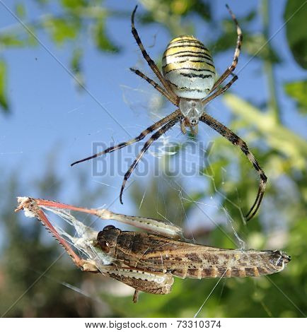 Spider and locust
