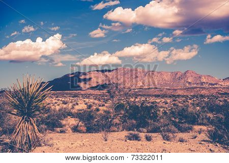 California Desert Theme