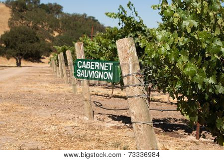 Cabernet Sauvignon Grapes Growing In California