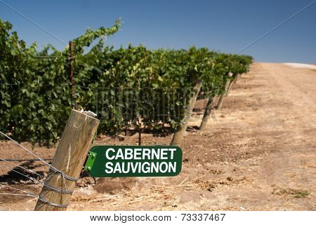 Cabernet Sauvignon Sign In California Vineyard