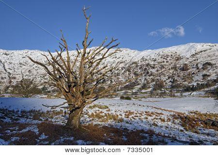 Langdale Snow Landscape