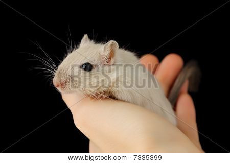 Cute Pet Mouse