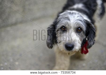 Cute look of a stray dog