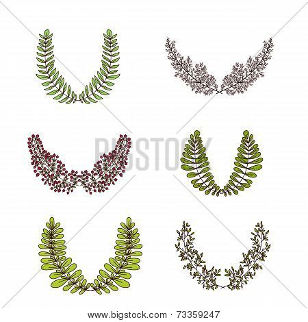 Vector Laurel Branches and Frames Collection
