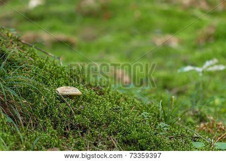 Hidden Among The Moss