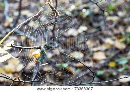 Abstract Web On An Indistinct Background