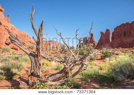 American Southwest Desert Landscape