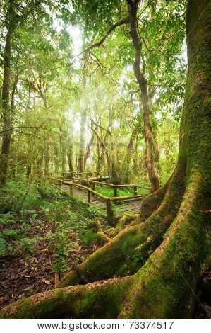 Tropical Misty Rainforest Landscape Of Outdoor Park With Big Tree Roots, Jungle Plants And Wooden Br
