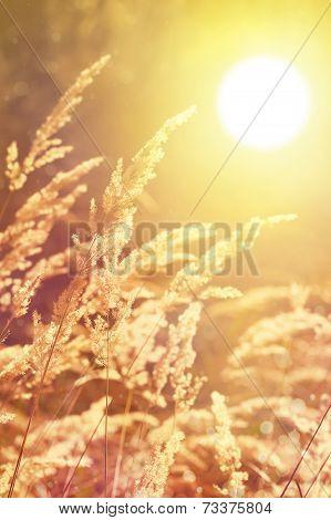 Autumn Sunny Nature Background