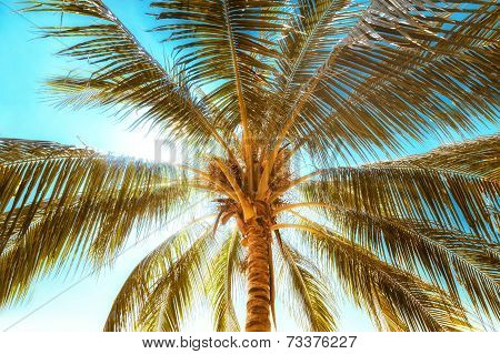 Summer Background  With Tropical Palm Tree Leaves At Sunny Day