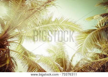 Abstract Summer Background  With Tropical Palm Tree Leaves