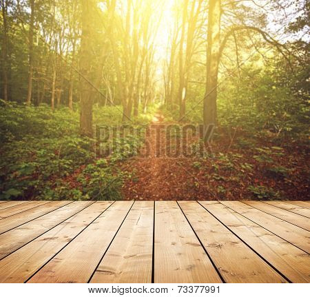 Beautiful sunlight in the autumn forest. Beauty nature background. Wooden floor. Background is blurred