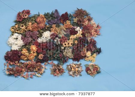 group of dried flowers on blue background