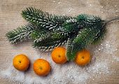 picture of tangerine-tree  - Christmas decor tangerine and decorations with snow - JPG