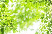 foto of superimpose  - abstract green leaf bokeh background for design - JPG