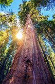 stock photo of redwood forest  - Epic Sequoia Place in the Middle of Sequoia National Park Forest - JPG
