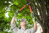 pic of prunes  - Professional gardener pruning a tree - JPG