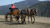 pic of blinders  - mature woman driving a beautiful carriage pulled by two matched buckskin mules - JPG