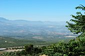 picture of baeza  - Olive groves and surrounding countryside Baeza Jaen Province Andalusia Spain Western Europe - JPG