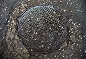 foto of manhole  - Manhole with metal cover in the cracked asphalt surface wet after the rain and with fallen acacia flowers on it - JPG