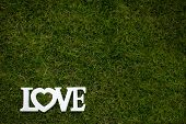 picture of soulmate  - Love is in the air and on the green  - JPG