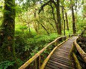 picture of jungle  - Jungle landscape - JPG