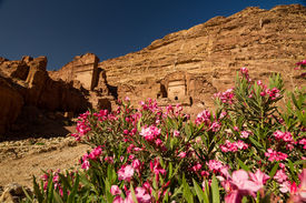 stock photo of camel-cart  - Facade of a beautiful building in the archaeological site of Petra Jordan with pink oleander flowers in the foreground - JPG