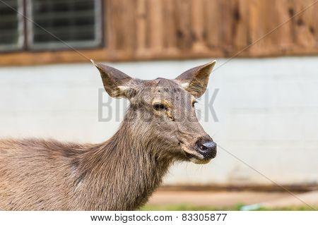 Deer Standing On The Grass.