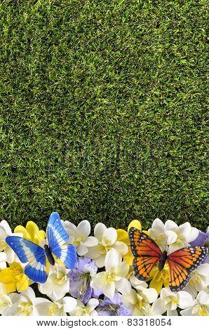 Spring Or Summer Border Background